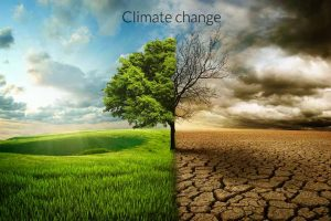climate change current situation and how we can help co2cards